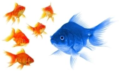 I'm Not You, You're Not Me. So Why Do We Have the Same Internet? | Institut de l'Inbound Marketing | Scoop.it