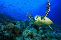 L'Australie va-t-elle sacrifier sa Grande Barrière de Corail au gaz de schiste? | La préservation de l'environnement marin | Scoop.it