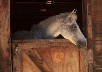 Old World Viruses 'New' Cause of Equine Neurologic Disease | Virology News | Scoop.it