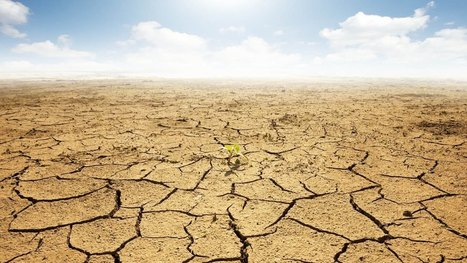 Not Even Jesus Is Going To Save California From This Drought | Permaculture, Horticulture, Homesteading, Bio-Remediation, & Green Tech | Scoop.it