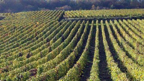 Champagne : l'hectare dépasse le million d'euros | Champagne Actu | Scoop.it