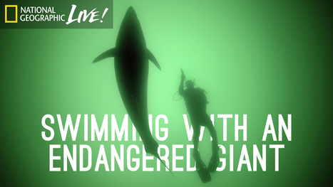 Swimming With an Endangered Giant | IELTS, ESP and CALL | Scoop.it