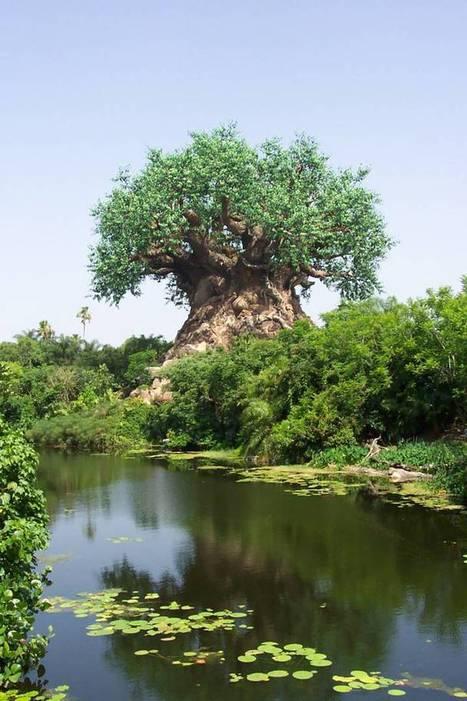 El misterioso Arbol de África | photo and roll | Scoop.it