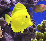 New Initiatives to Clean Up The Global #AquariumTrade   Rescue our Ocean's & it's species from Man's Pollution!   Scoop.it
