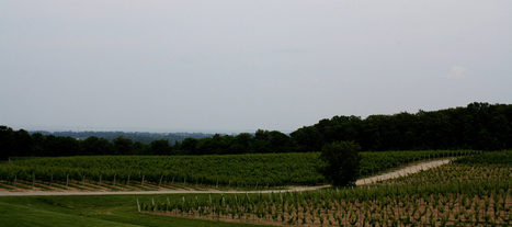 Niagara Wine Tourism Growing Strong | Niagara Falls Tourist Attractions | Scoop.it