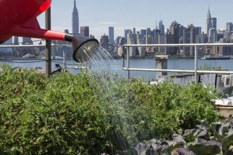 Developing a Thirst for Urban Agriculture | Food related production. | Scoop.it