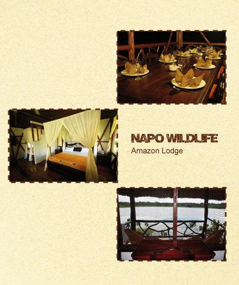 Napo Wildlife Center   Amazon Ecuador   Ecuador Jungle   Travel Exotics of the world   Scoop.it
