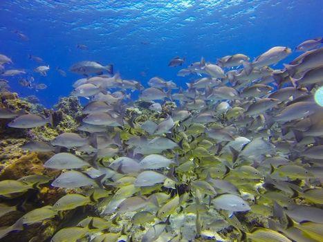 5 best diving spots to warm your bones - Fox News | Scuba Diving | Scoop.it