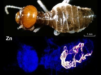 "Gold ""Mining"" Termites Found, May Lead Humans to Riches 