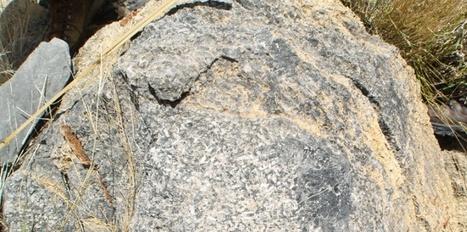 Les plus vieux récifs animaux datent de 550 millions d'années | Aux origines | Scoop.it