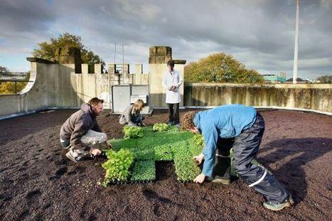 Des toits végétalisés contre la pollution | Toit végétalisés et agriculture | Scoop.it