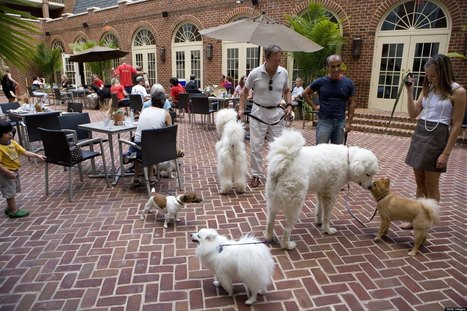 Dog-Friendly Dining In D.C. Area | Pet News | Scoop.it