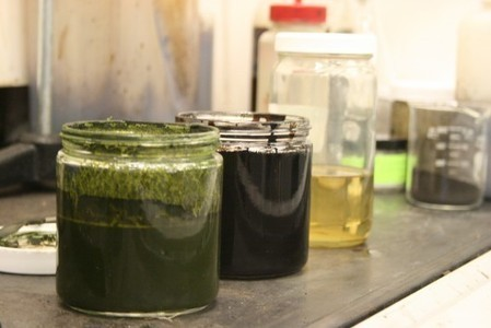 Algae to crude oil: Million-year natural process takes minutes in the lab | Science | Scoop.it