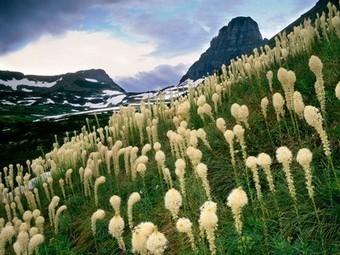 Glacier National Park - National Geographic | Glacier National Park | Scoop.it