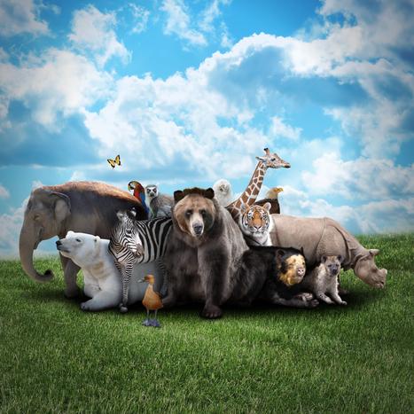 Depth Insights » Mythology of Animals by Joseph P. Muszynski, Ph.D | Depth Psych | Scoop.it