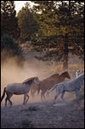 Run with the Horses | Christian Bible Studies | Theological Resources | Scoop.it