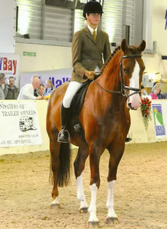 Rescue horse Bungle cuts fine figure in dressage ring | Horses  around the world | Scoop.it