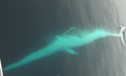 Amazing Whale Sighting (Video)   This Gives Me Hope   Scoop.it