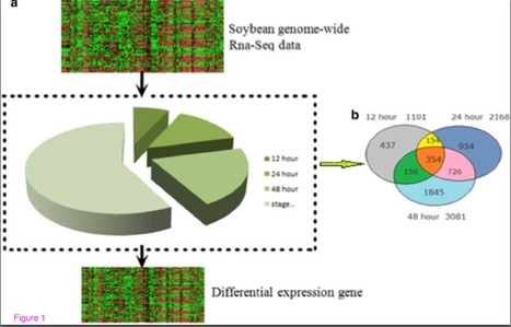 Predicting gene regulatory networks of soybean nodulation from RNA-Seq transcriptome data. | Symbiotic Nitrogen Fixation | Scoop.it