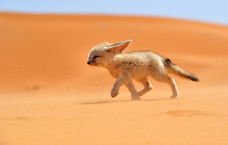 You Don't Understand, I Need Pie! : youcancallmepotter: 50you50me: An adorable... | desert photography | Scoop.it