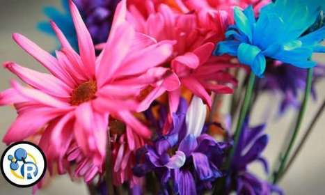 Video: How to make cut flowers last longer | Sustain Our Earth | Scoop.it