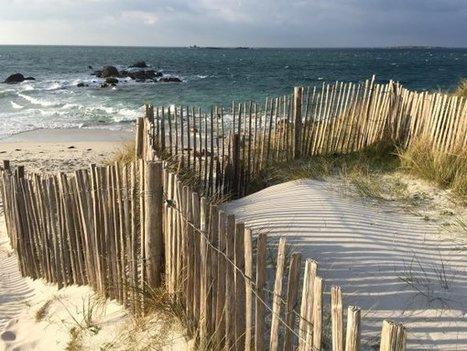 Mission Flore Scamonée Aiguë : Observer tout en préservant l'équilibre fragile des dunes | Sciences participatives, pratiques collaboratives | Scoop.it
