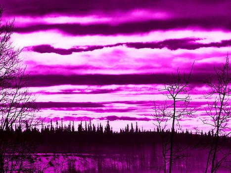 Purple Haze | Flickr - Photo Sharing! | The Amused Catholic: an Ezine | Scoop.it