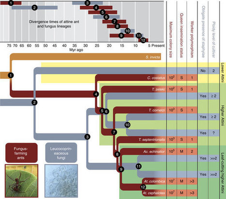Reciprocal genomic evolution in the ant-fungus agricultural symbiosis : Nature Communications : Nature Research | MycorWeb Plant-Microbe Interactions | Scoop.it
