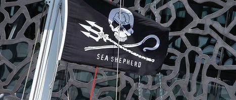 Îles Féroé : des militants opposés à la chasse à la baleine expulsés | Chronique d'un pays où il ne se passe rien... ou presque ! | Scoop.it