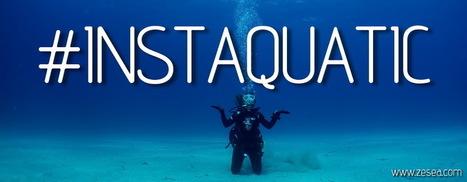 # INSTAQUATIC - Le Blog de la Plongée Bio | Biologie marine | Scoop.it