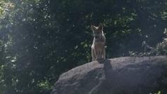 Succès grandissant pour le Parc des loups de Chabrières - France 3 Limousin   Actualités du Limousin pour le réseau des Offices de Tourisme   Scoop.it
