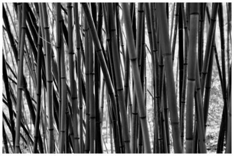 Japanese Stroll Garden in B&W - Steve's Digicams Forums | Japanese Gardens | Scoop.it