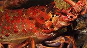 Wading Birds Web Cam   Monterey Bay Aquarium   Webcams of nature   Scoop.it