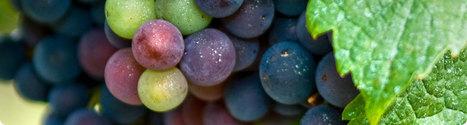 Les Wine StartUps se devoileront à Vinexpo | wine startups | Scoop.it