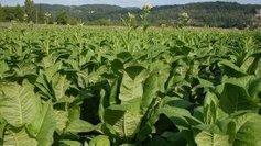 Plan social chez France Tabac | Agriculture en Dordogne | Scoop.it