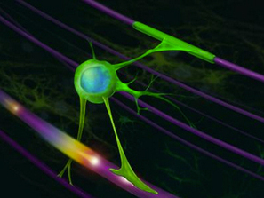 ALS: Much Ado About Oligodendrocytes | Motor Neurone Disease | Scoop.it