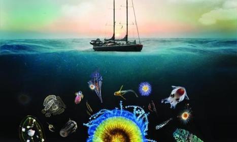 Expédition TARA Oceans : les 1ers résultats | Le groupe EDF | Scoop.it