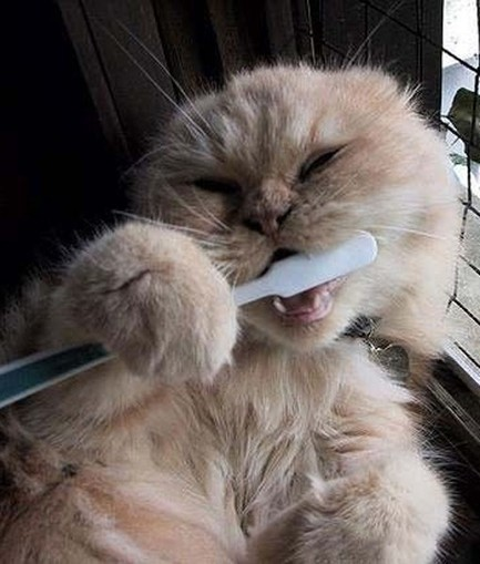 10 Dental Health Tips for Cats - PawNation | The Funniest Cats In The World! | Scoop.it