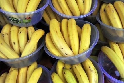 Disease threatens world's bananas, says UN | Sustain Our Earth | Scoop.it