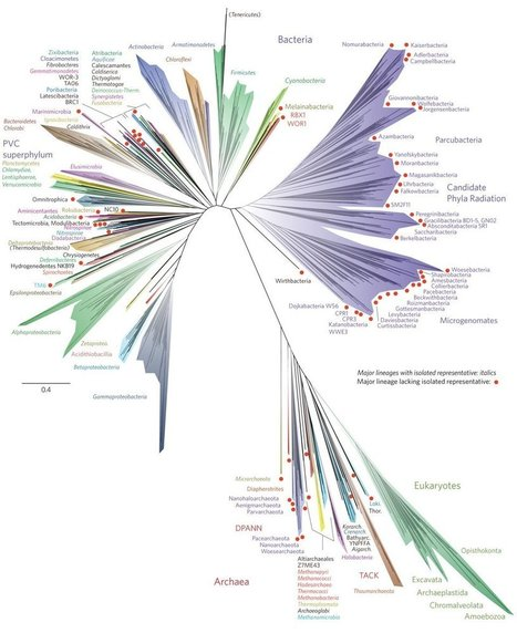 The Tree of Life Just Got a Lot Weirder | Twisted Microbiology | Scoop.it