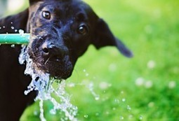 Got Water? Tips to Prevent Pet Dehydration | Pet Care tips | Scoop.it