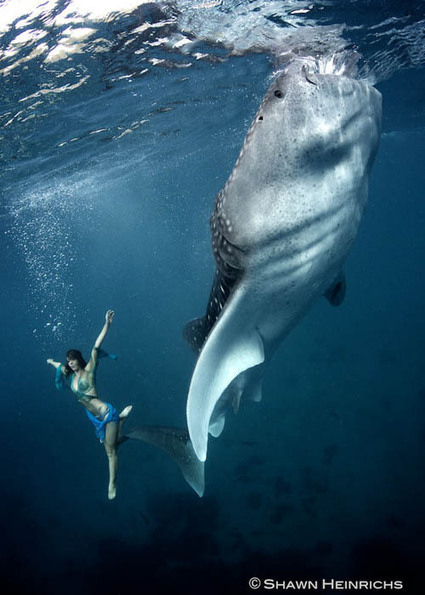An Underwater Fashion Shoot Featuring a Whale Shark | Digital-News on Scoop.it today | Scoop.it