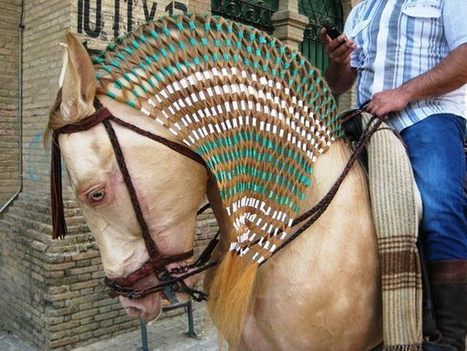 """Very cool way to """"braid"""" a mane   Equine Photography   Scoop.it"""