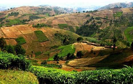 Countries Forge Ahead on Mitigation in Agriculture Despite UNFCCC Delays - Climate Change Policy & Practice (IISD)   CGIAR Climate in the News   Scoop.it
