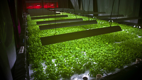 Food Scraps To Fuel Vertical Farming's Rise In Chicago   FOOD   Scoop.it