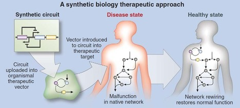 Synthetic Biology is on its Way to Treating Human Disease   SynBioFromLeukipposInstitute   Scoop.it