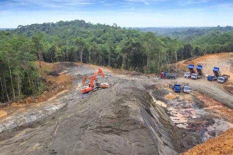 Palm Oil Still Driving Deforestation   World Environment Nature News   Scoop.it