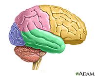 Enfermedades del cerebro: MedlinePlus en español   la ciencia cognitiva, una investigación interdisciplinar:Etapas de su construcción, Jesús Martínez Velasco.   Scoop.it