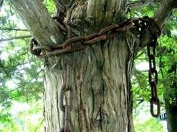 De la protection de nos arbres. Comment, mais surtout pourquoi. | Papiers et poussières | GenealoNet | Scoop.it