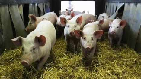 Bundesverwaltungsgericht: Das müssen Sie über den Biowurst-Streit wissen | Agrarforschung | Scoop.it